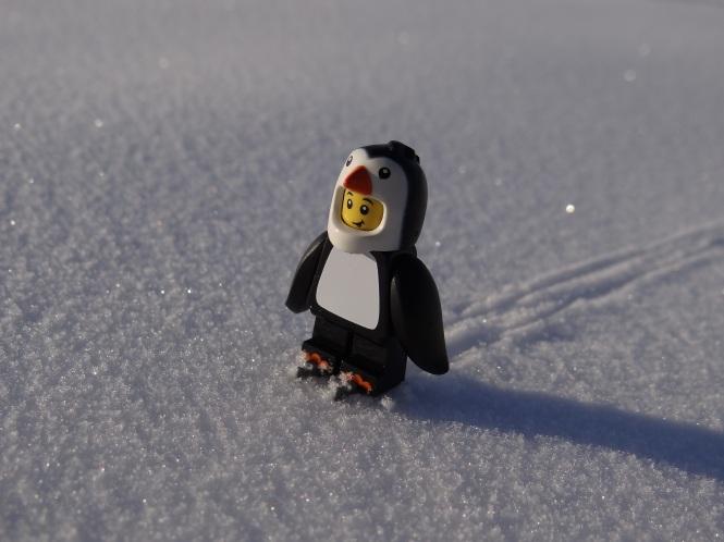 Pinguin 3.JPG